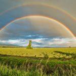 占星術的視点から考える発達障害と幸福の関係